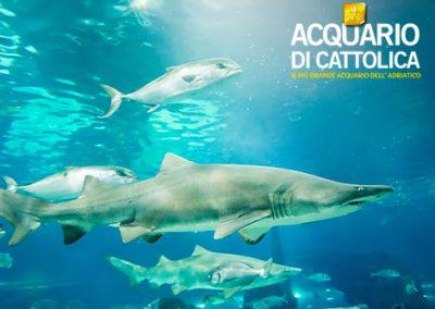 acquario di cattolica 3